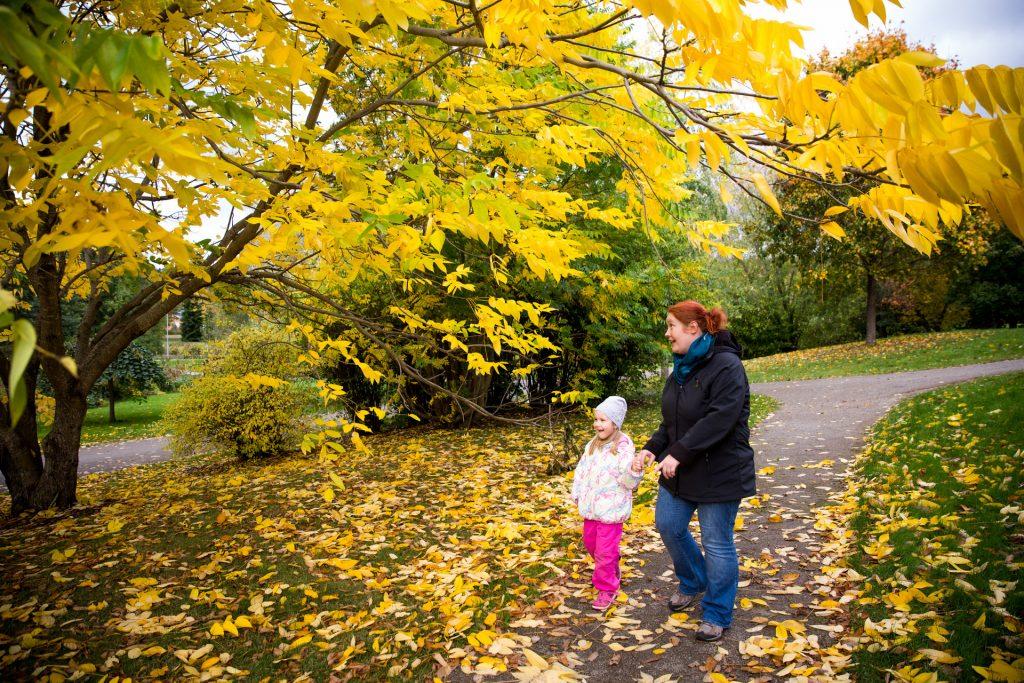 Syksyinen kuva Launeen keskuspuistosta. Etualalla keltalehtinen puu. Aikuinen ja lapsi ihastelemassa puun lehtiä.